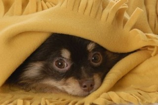 If your dog is not a fan of bonfire night, they may try to hide away from the noise