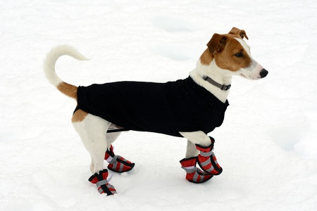 Think about getting snow shoes and a dog coat if it gets really cold or snows this winter