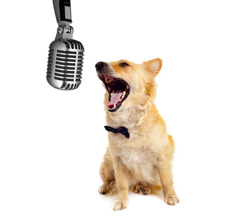 Dog of all ages and sizes love singing