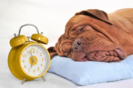 Make sure your dog is ready for when the clocks go back an hour by getting them prepared