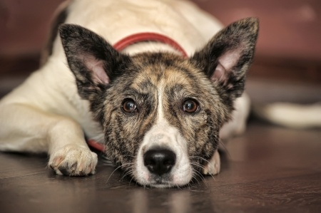 Older dogs can be great companions because of their more placid nature