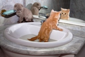 Try to make your cat bath in the sink to make life easier