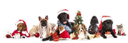 Dogs and cats at Christmas