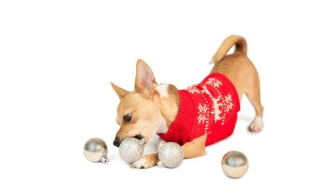 christmas gift guide dog in jumper