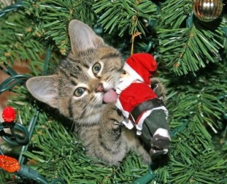 You may want to make a cat proof Christmas tree if your feline friend likes to get up to mischief