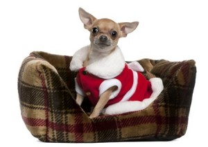 Dog beds are a great present to buy your pet at Christmas