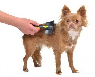 A small dog being brushed and groomed