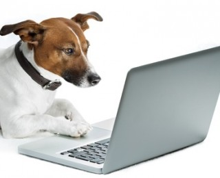Reading a dog blog is a great way to learn about your pet