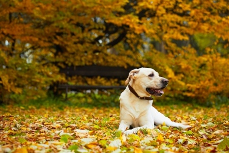 The 12 Dog Breeds Of Christmas - Argos Pet Insurance
