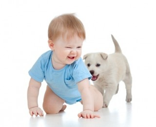 A baby plays with a puppy