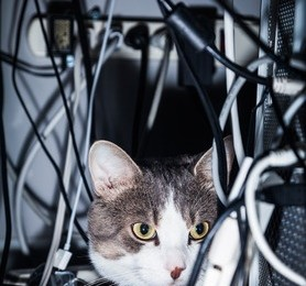 Prevent cat electric shocks by keeping them away from cables like these