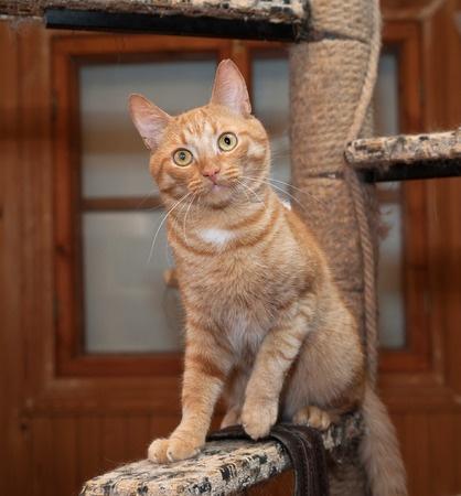 We talk pet blog in january 2016 argos pet insurance for Having an indoor cat