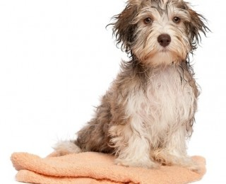 Get a towel ready and at hand when bathing a puppy