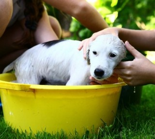 Ensure you have plenty of time and patience when bathing a puppy for the first time