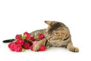 A cat with red roses