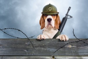 A dog dressed up in army gear
