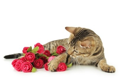 Cat with Valentine's Day flowers
