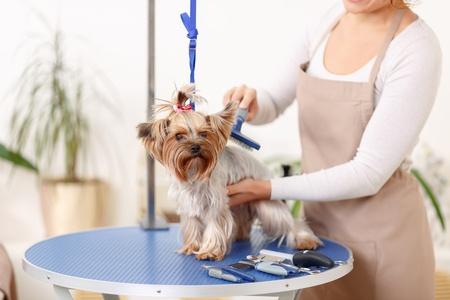 Choosing a good dog groomer near me can be a hard task