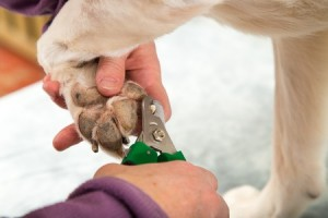 A dog gets its nails clipped