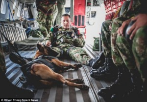Jany – a Belgian Malinois who works for the army