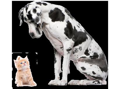 New Microchipping Law - Argos® Pet Insurance