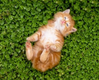 Funny kitten on its back