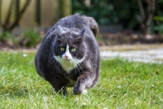 Overweight cat in garden
