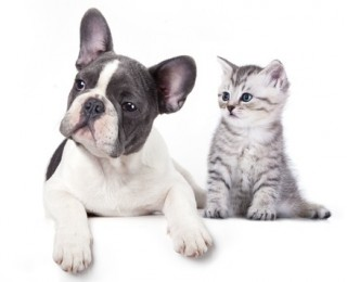 Puppy and a kitten for Argos Pet Insurance blog