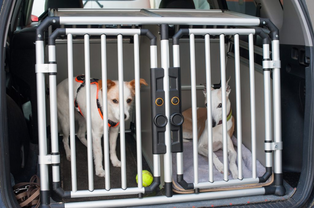 car safety for pets