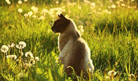 cat safe in summer