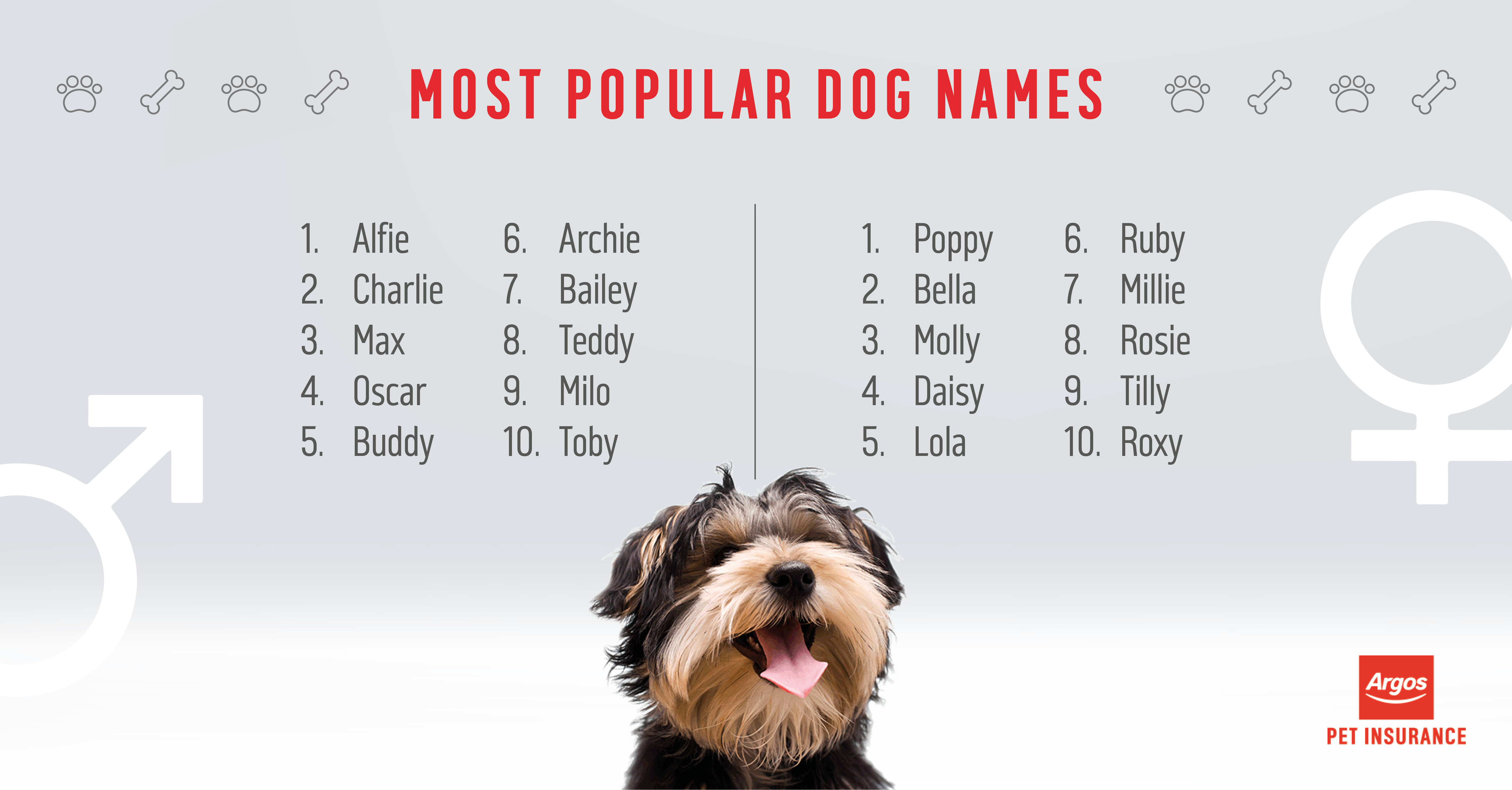 Top Dog Breeds With Cats