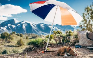 "alt=""dog keeping cool under umbrella"""