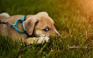 The legal requirements of a dog collar - Argos Pet Insurance