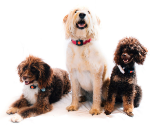 Three happy dogs sitting together - exercise your dog