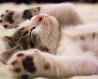 cats show love - cute kitten sleeping