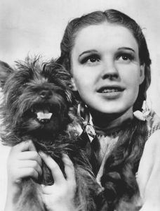 7 Famous Dogs That Stole Our Hearts - Toto the dog from the Wizard of Oz poses with Dorothy