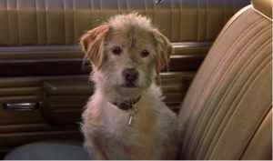 7 Famous Dogs That Stole Our Hearts - Baxter the dog from Anchorman looks scruffy sitting in a brown car