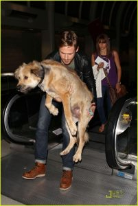 7 Famous Dogs That Stole Our Hearts - Ryan Gosling helps his big dog get off an escalator