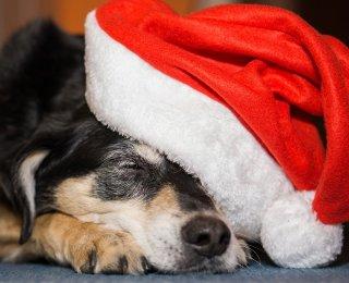 dog enjoying christmas celebrations