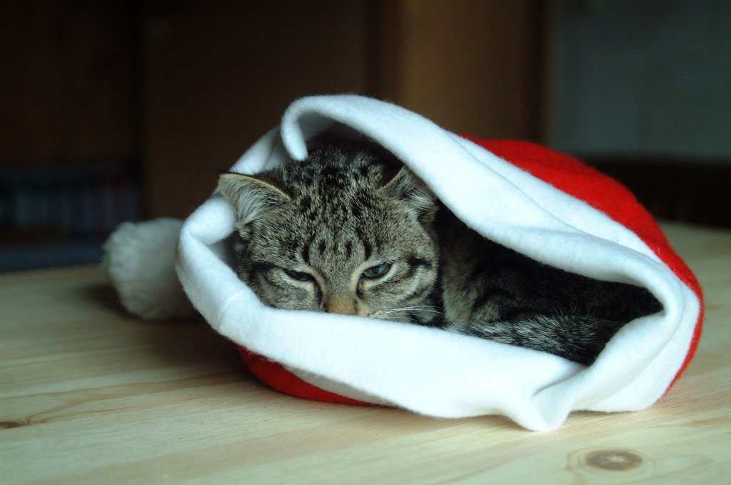 Cat Christmas Gift Guide - Cat Sleeps in Christmas Hat
