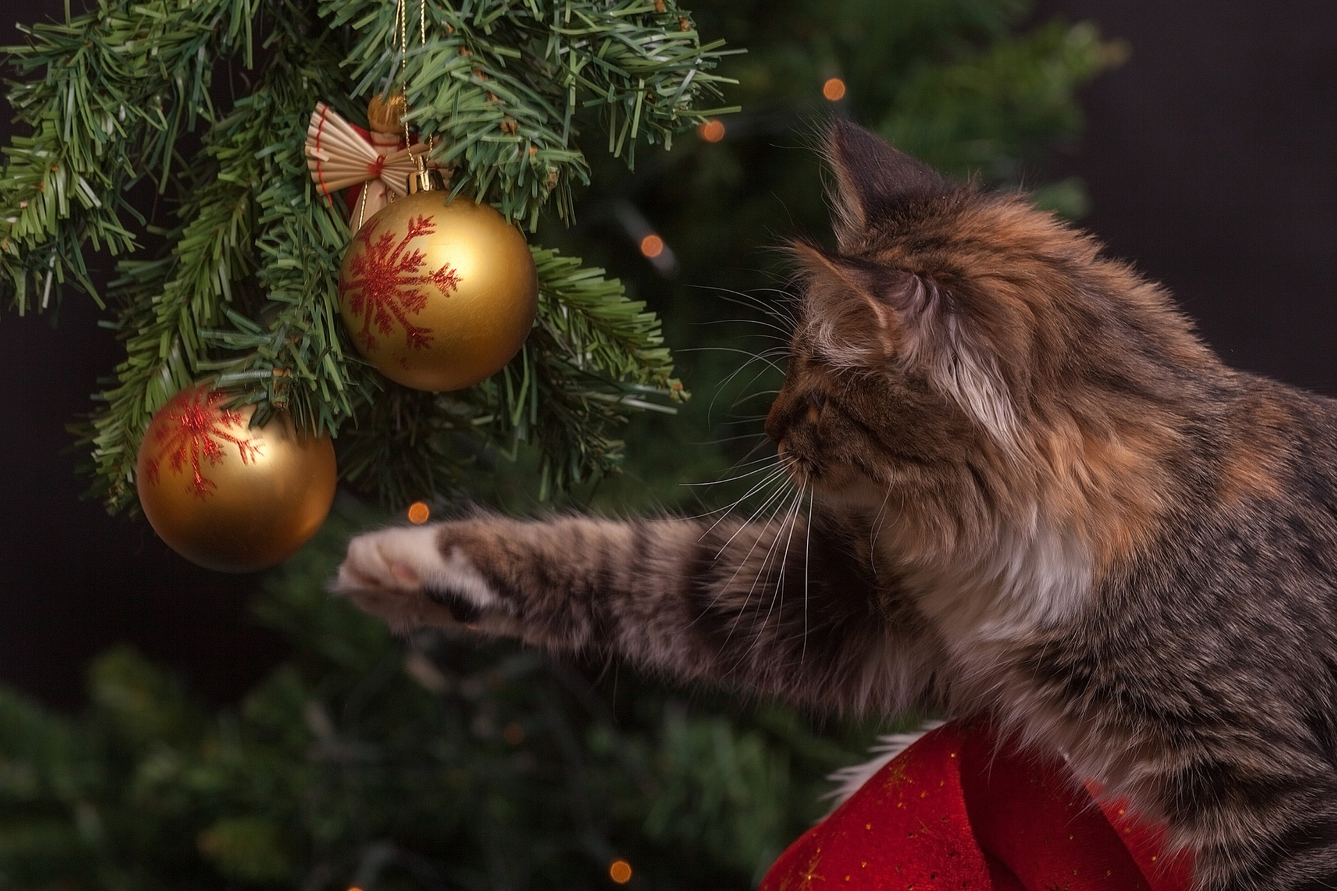 how to keep your cat away from the christmas tree - How To Keep Cat Away From Christmas Tree