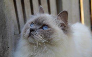 Cat Health: Feline Enteritis Explained - Argos Pet Insurance