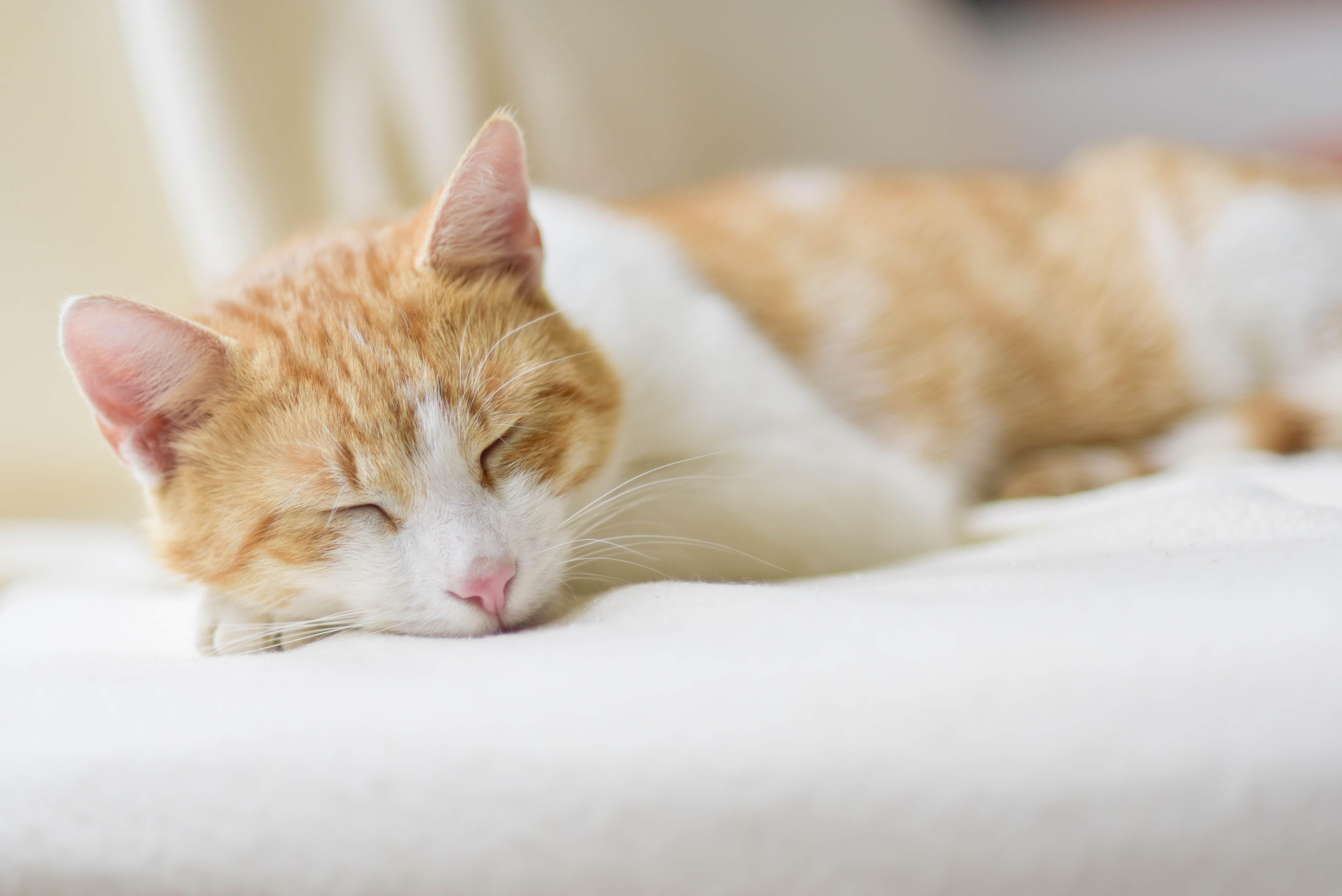 What Can Help A Cat When Sneezing From A Virus