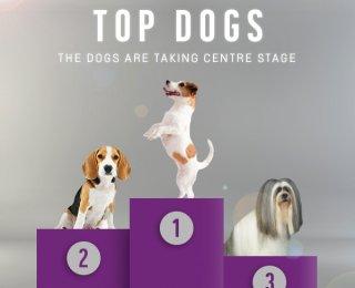 Dog show Crufts Scruffts