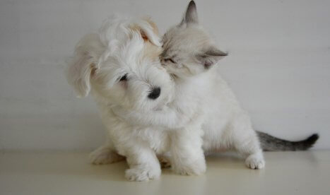 pet insurance renewal