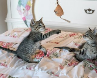 Two kittens on bed playing with cat toy