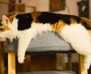 shy cat laid on chair