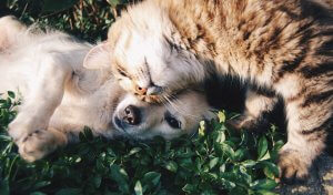 Cat headbutting dog