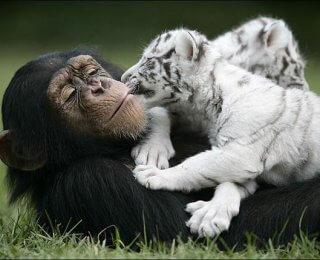 world friendship day - anjana and tigers