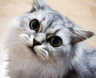 insta-famous pets